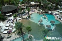The Pool at the Hard Rock Hotel & Casino