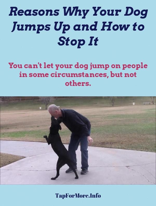 Stop Dog Jumping And Leash Aggression Training Check The Image