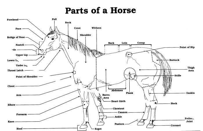 grooming tack for horses