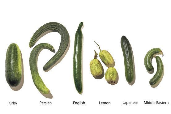 SO Many Kinds of Cucumbers - YUM