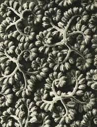 Karl Blossfeldt – Art Forms in Nature