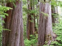 Image result for bc forest