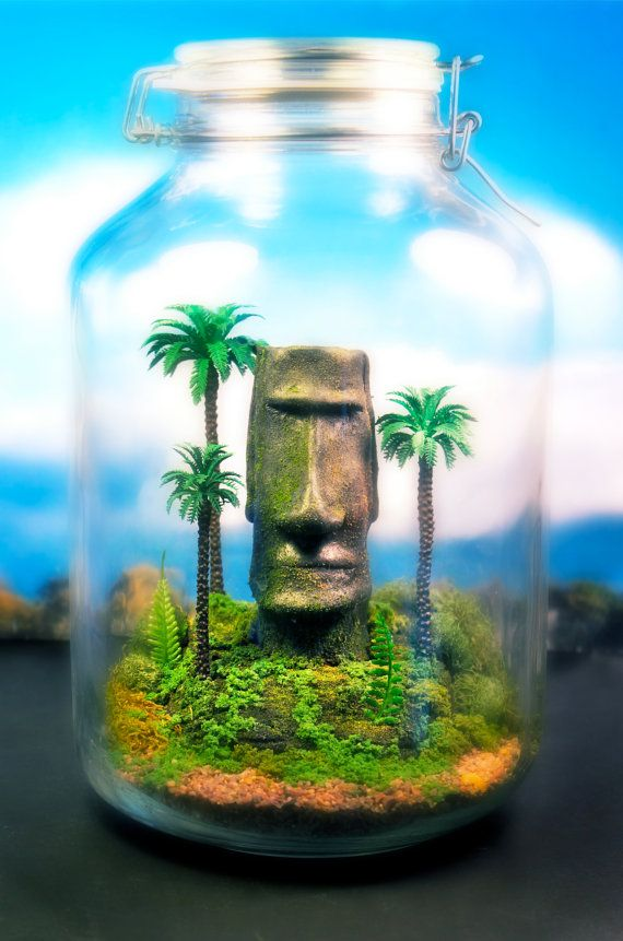 113 best life 39 s a bowl of planties images on pinterest for Moai fish tank