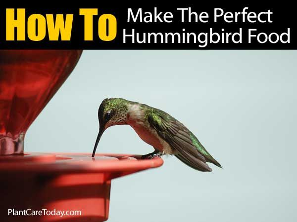 perfect-food-hummingbird-063014
