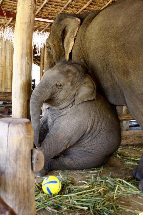 ❤️ Baby Elephant ❤️ Buy Stuffed Elephant Toy Plush Animal Nursery Pillow here: https://www.etsy.com/uk/listing/465468794/huge-plush-elephant-soft-toy-pillow?ref=shop_home_active_12