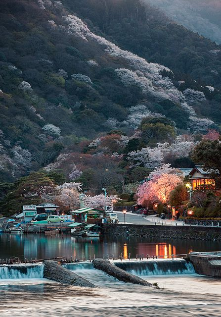 Cherry trees in full bloom, Arashiyama, Kyoto, Japan