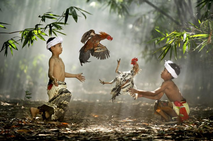 Suradita Village, West Java, Indonesia. Children playing with their roosters, via TBP
