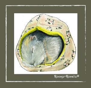 Roosje~Rosalie® Cavia Melvin ligt lekker in zijn muts te slapen. www.roosjerosalie.nl