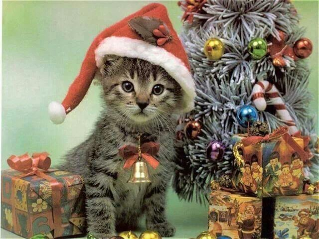 Cat at Christmas