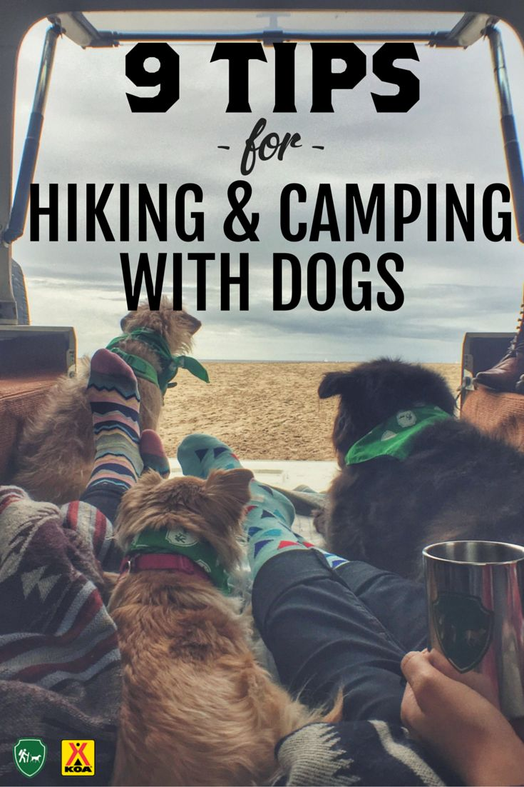 Tips from Camping with Dogs Pardon the spelling, but they do have good tips