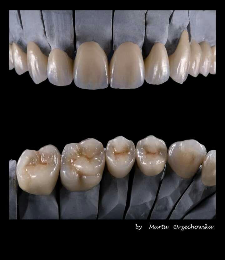 анатомии шпаргалки для техников по зубных