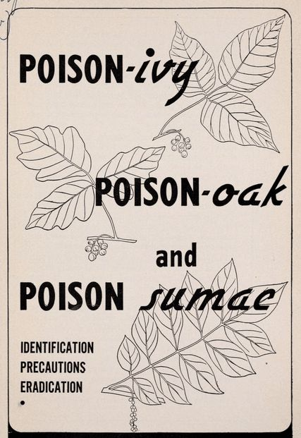 How to Recognize Poison Ivy, Oak, & Sumac and Treat Their Rashes
