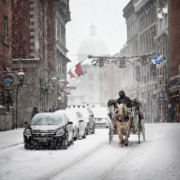 Free Montreal Plateau-Mont-Royal Horse Carriage Rides For All Of December 2014 | MTL Blog