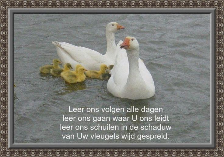 Leer ons volgen alle dagen Leer ons gaan waar U ons leidt Leer ons schuilen in de schaduw Van Uw vleugels wijd gespreid.