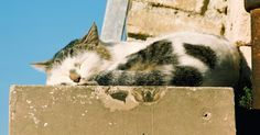 Cement is a porous surface. If a cat pees or marks on concrete, the urine smell is stubborn and long-lasting. Before trying one of the pricey commercial pet-odour removal products ...