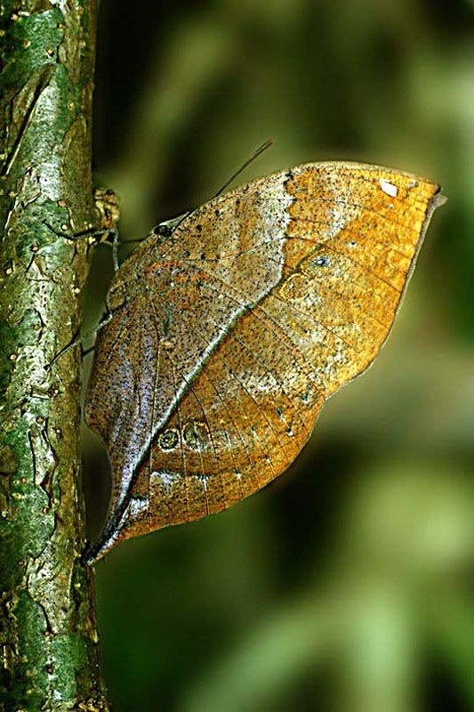 955 best Camouflage and Mimicry images on Pinterest ...