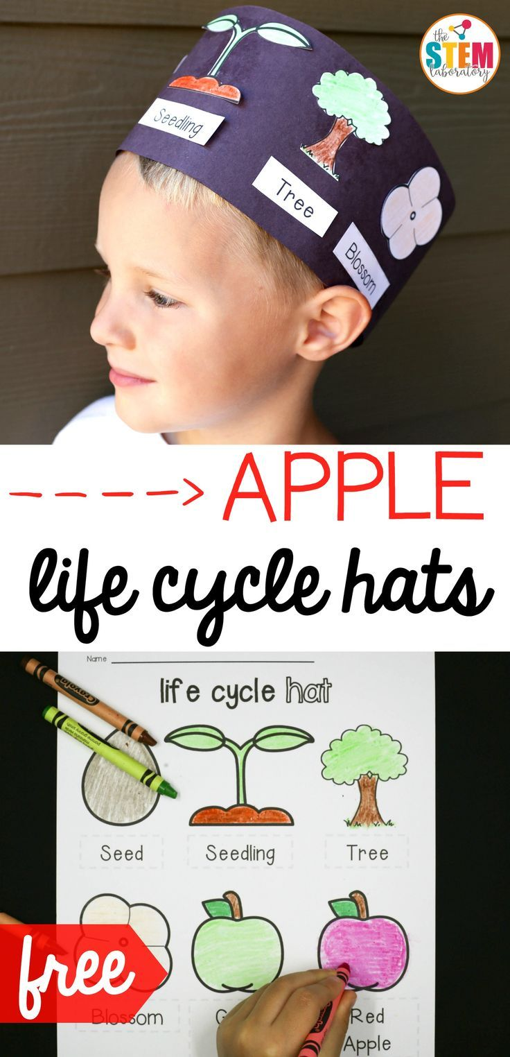Free apple life cycle hats! Fun science activity and craft project in one. Perfect for fall or an apple unit.
