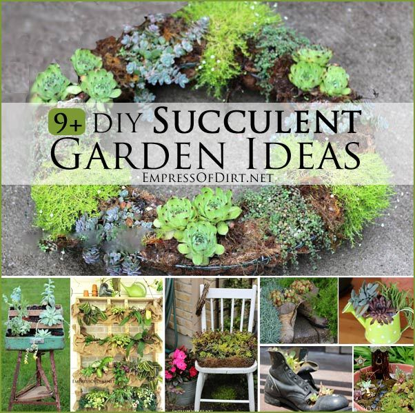9 Diy Succulent Garden Ideas Succulents Garden Garden