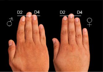 Finger professor John Manning presents new digit ratio theory ...