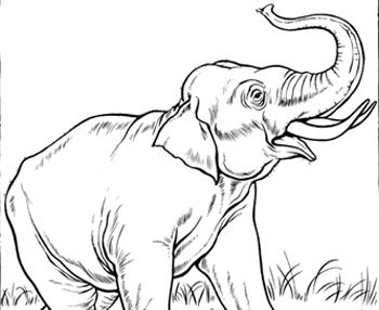 printable zoo animals coloring pages