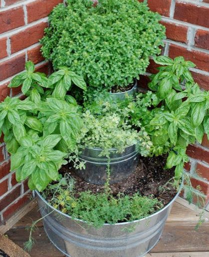 Great way to grow herbs: Gardens Ideas, Back Doors, Buckets, Doors Herbs, Plants, Herbs Gardens, You, Small Spaces,  Flowerpot