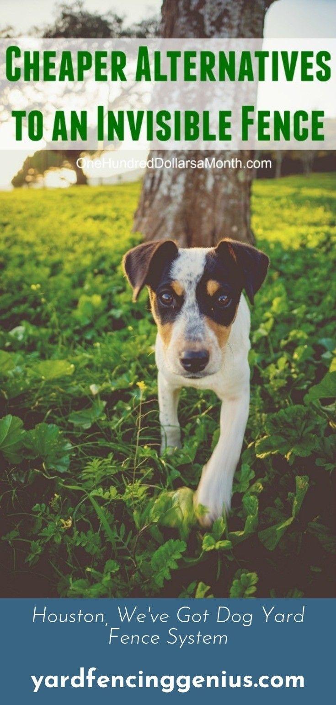 Find More Information On Privacy Fencing Dog Training Dog