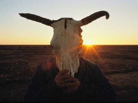 cow skull and desert - photo #27