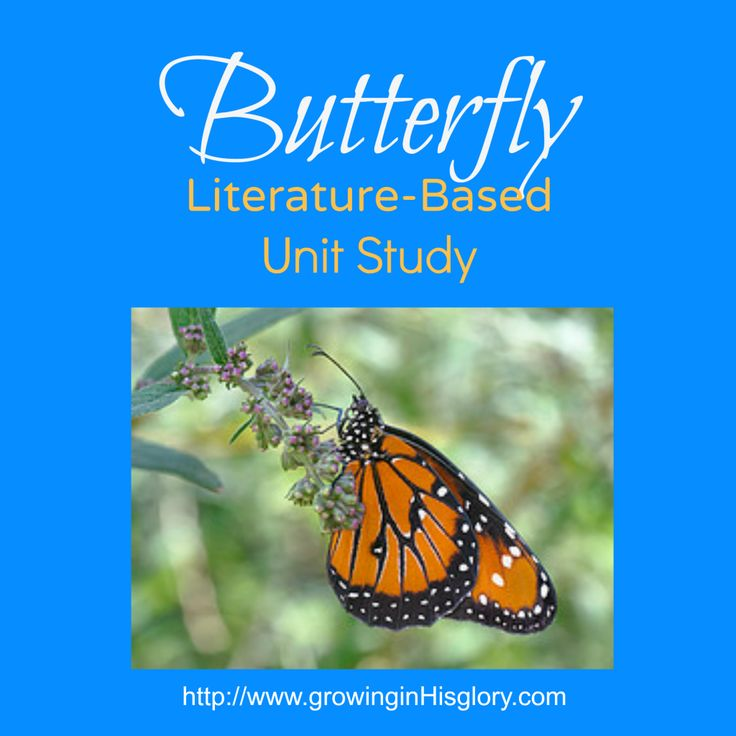 Monarch Butterfly Lesson for Kids | Study.com