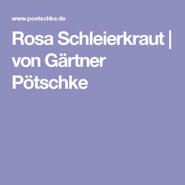 Rosa Schleierkraut | von Gärtner Pötschke