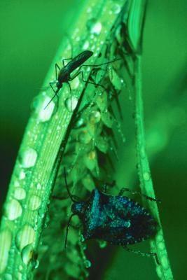 La proporción de amoníaco y jugo de limón al agua para el control de mosquitos | eHow en Español