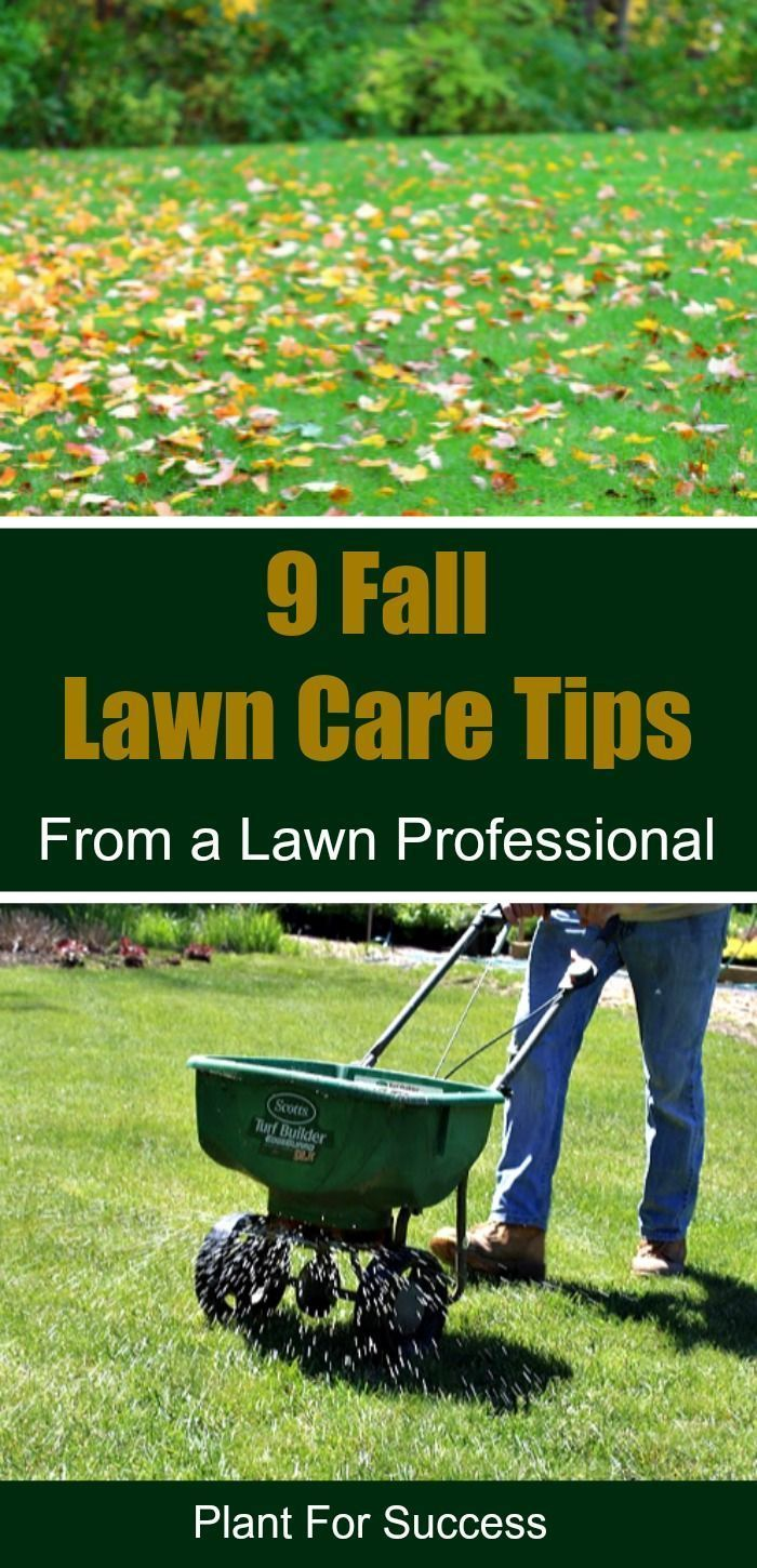 Follow These 9 Fall Lawn Care Tips For A Green Healthy Lawn Core