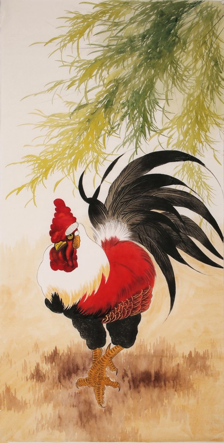Chicken - CNAG000489
