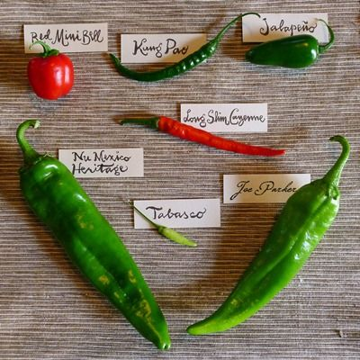 17 best images about peppers on pinterest gardens - Best romanian pepper cultivars ...