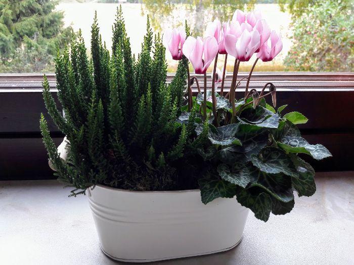 Koivikon Katveessa: Kukkailoittelua keittiönikkunalla