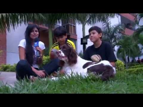 Adiestramiento Canino en Casa Historia de la familia Thomas - YouTube