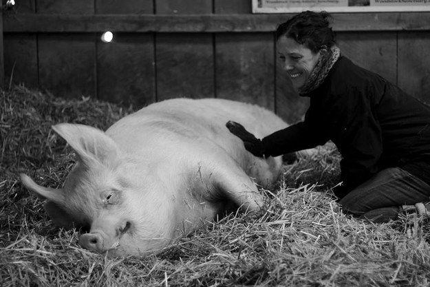 Woodstock Farm Animal Sanctuary, New York state