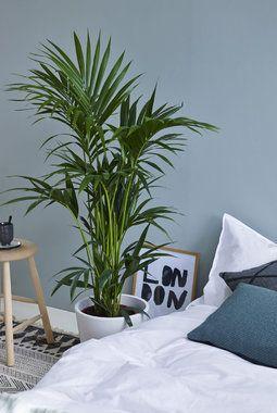 Grønne planter passer godt på soverommet