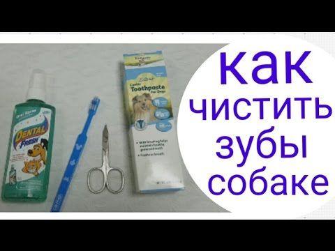 Как почистить зубы маленькой собаке.