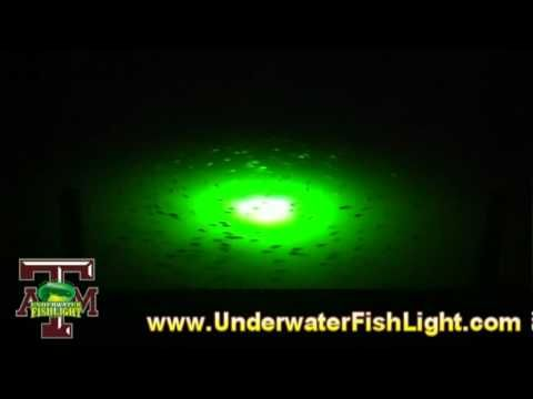 Texas A&M & UnderwaterFishLight.com - Underwater Lights to Attract Fish for University Study - YouTube