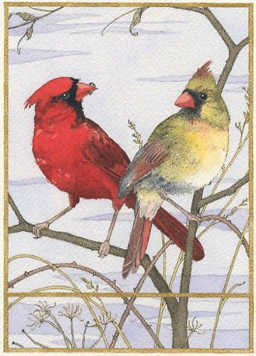 Cardinal Pair - Ink and watercolor painting by Carrie Wild