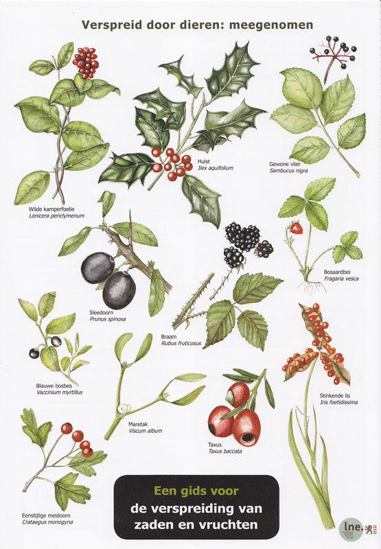 Kaart Verspreiding van vruchten