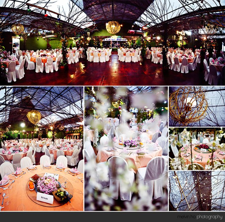 wedding reception photo booth singapore%0A Cool Orchidville Singapore Singapore Wedding Photographer   PreWedding  Photography   Bridal Photography   Actual