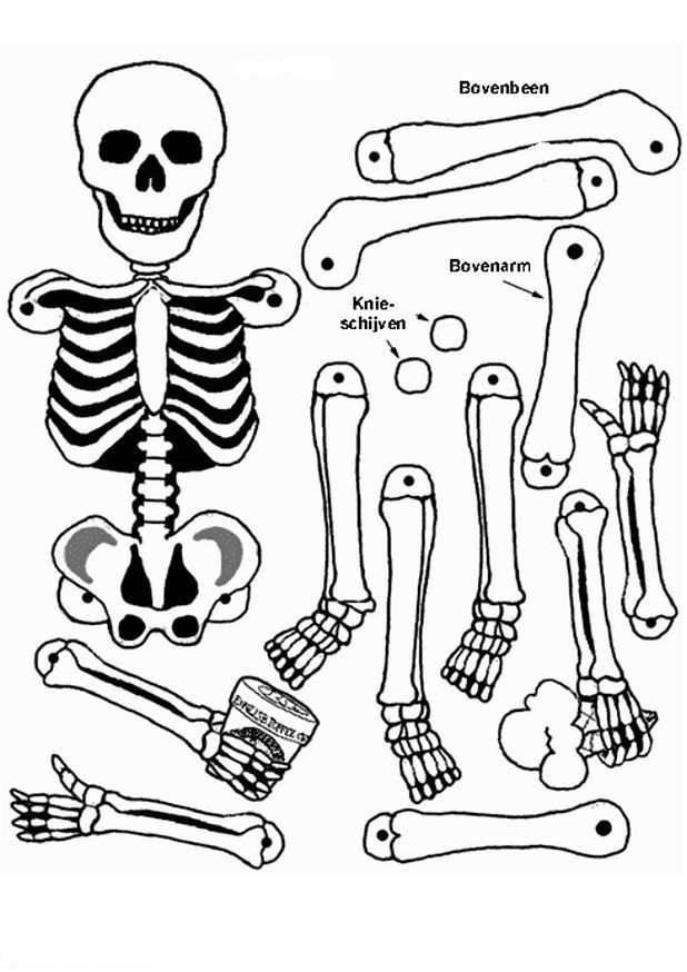 Skeleton Coloring Page - use gold brads