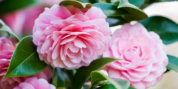 10 Flowers With Surprising Meanings - Meanings of Flowers