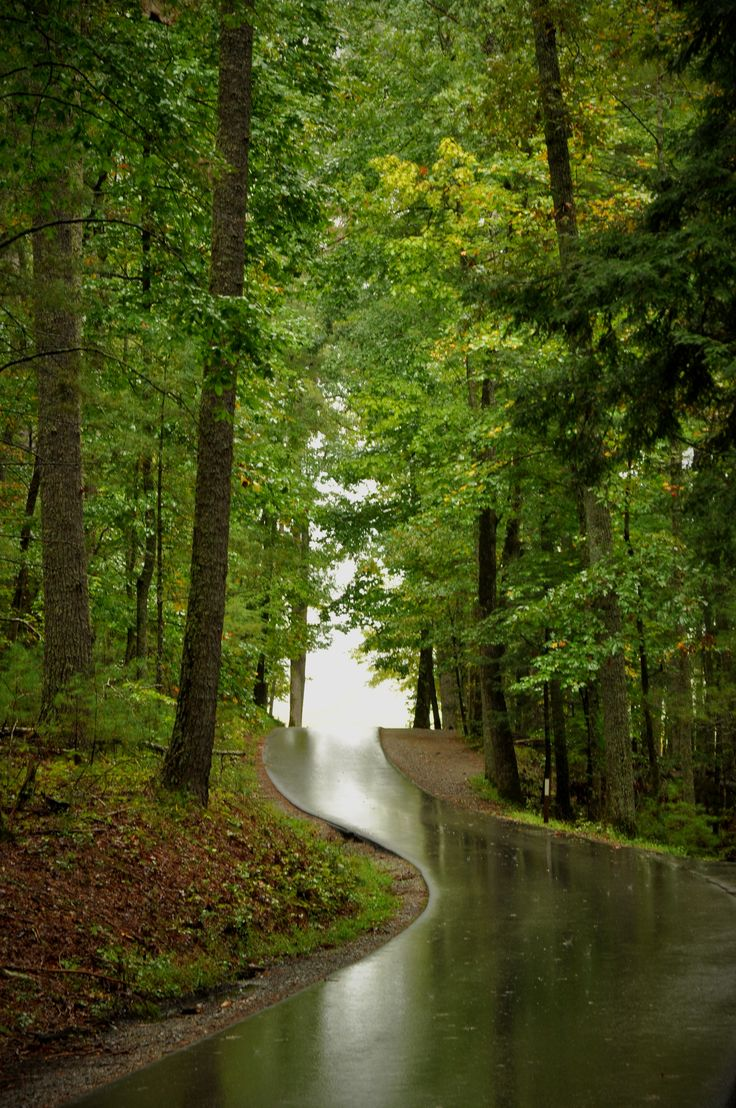 1256 Best Travel The Smokies Images On Pinterest