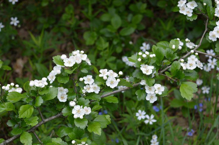 Wild flower. Spring