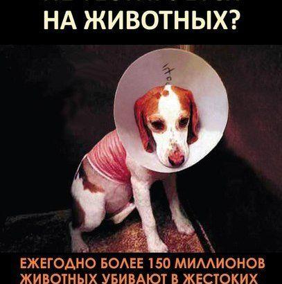 Prohibit the testing of cosmetics on animals in Russia. Petition · Запретить тестирование косметики на животных в России · Change.org