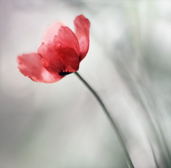 Beautiful flower - macro photography by Ukraine photogapher Natalia Ova.  http://www.cuded.com/2011/05/beautiful-flowers-by-natalia-ova/