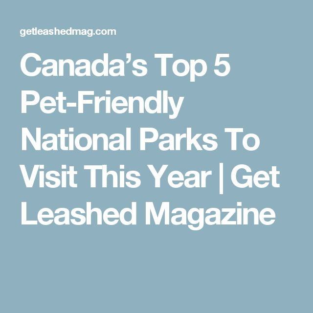 Canada's Top 5 Pet-Friendly National Parks To Visit This Year | Get Leashed Magazine