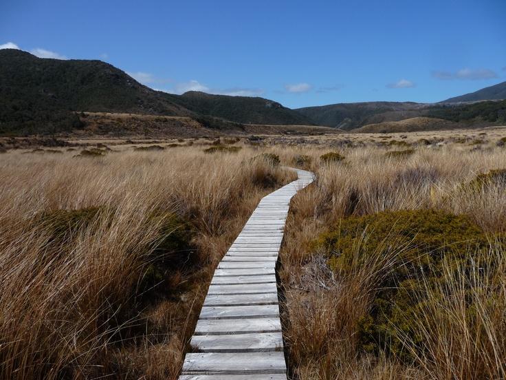A track in the direction of the mountains through grassland on the Heaphy Track.